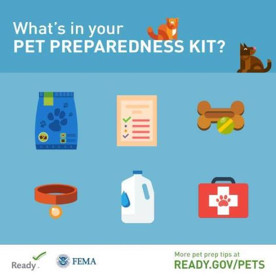 Graphic: What's in Your Pet Prep Kit?